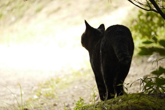 """画像: 「ニャンとまぁ…」イギリス財務省が""""猫""""を採用し話題に"""