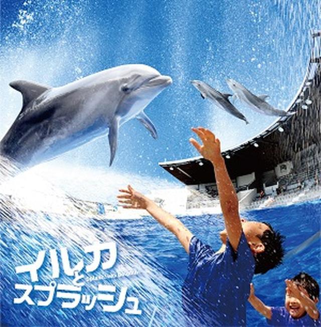 画像: 2016年夏限定イベント巨大ウォーターカーテンとイルカのコラボレーション『イルカとスプラッシュ!!』を開催7/9~9/30(※イベントは終了しました) | 京都水族館