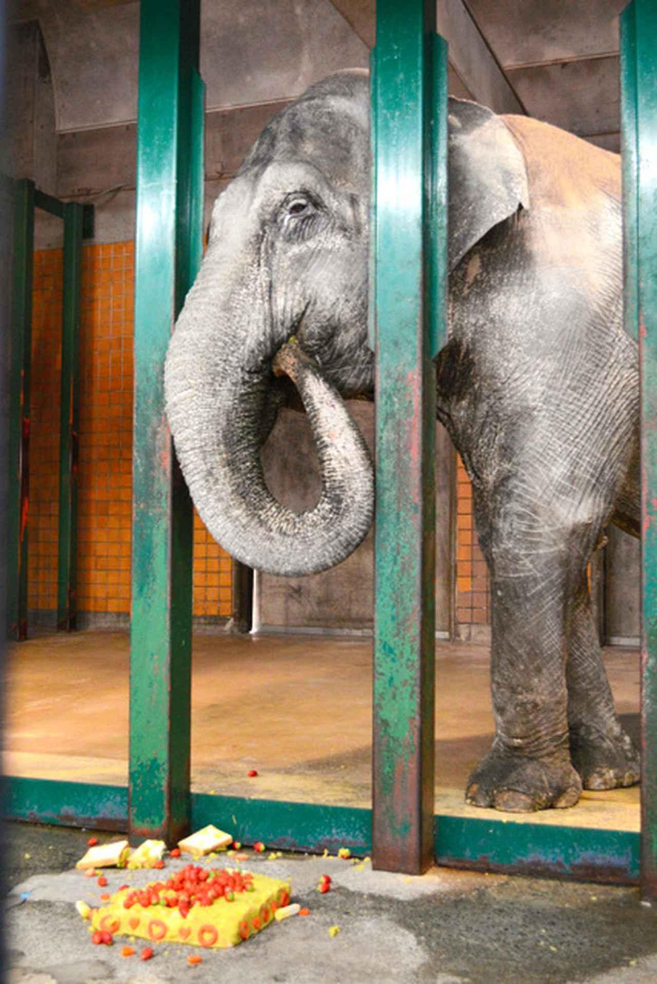 画像: ゾウの「はな子」死ぬ 69歳 井の頭自然文化園:朝日新聞デジタル