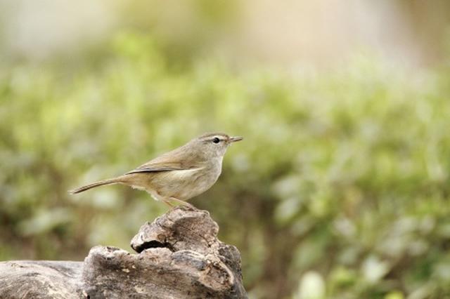 画像: イベント:野鳥フォトフェスタ 初心者から楽しめる、野鳥撮影の特別イベント