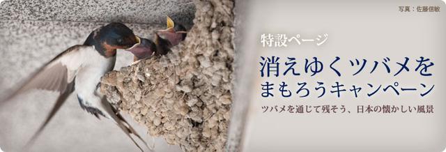 画像: 日本野鳥の会 : 消えゆくツバメをまもろうキャンペーン