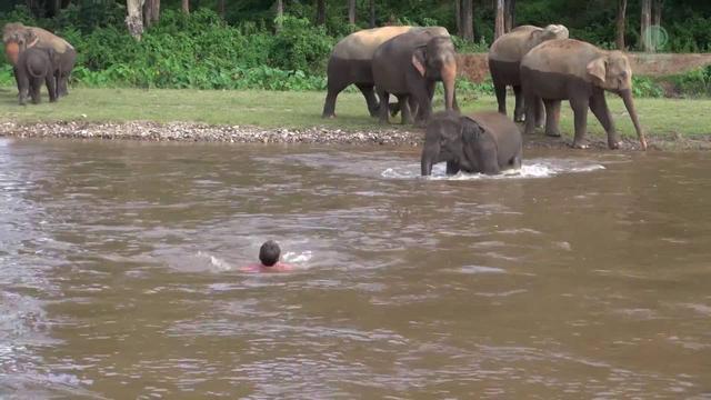 画像: Elephant Come To Rescue People www.youtube.com