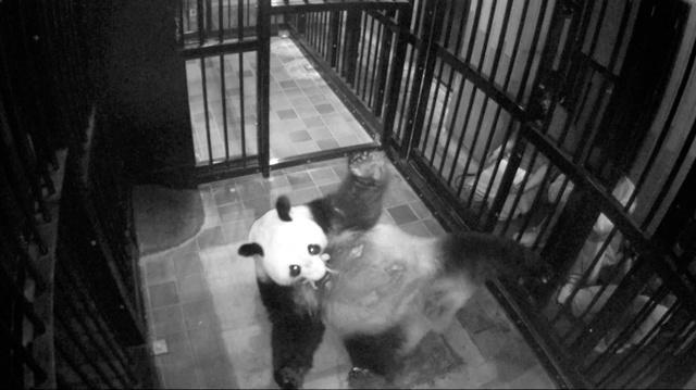 画像: 上野動物園のパンダ、シンシンが出産 5年ぶり:朝日新聞デジタル