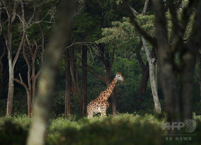 画像: 野生動物に最大の絶滅危機、人類がもたらす 科学誌