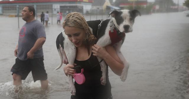 画像: ハリケーン「ハービー」 人々は、取り残された動物を見捨てなかった。