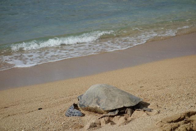 画像7: リスナーさんのハワイ体験記