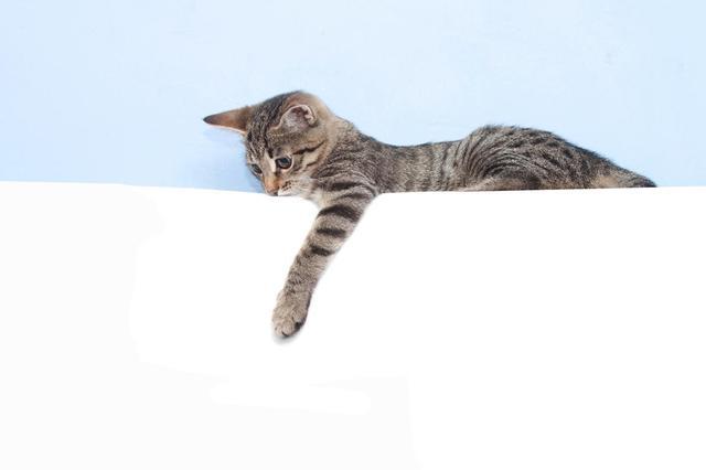 画像: 猫の「利き手」を研究、オスは左でメスは右