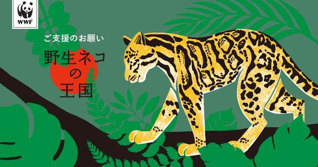 画像: WWFの熱帯林を守る活動を、ぜひご支援ください。|WWFジャパン