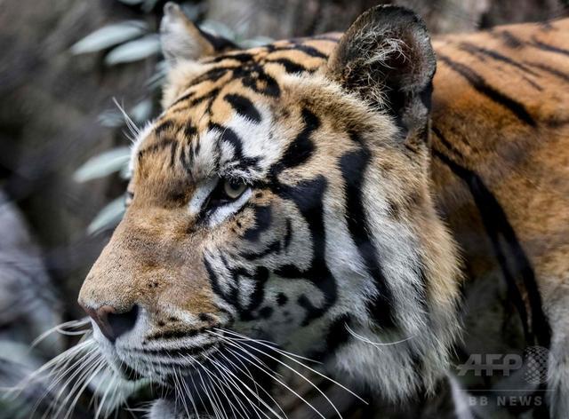 画像: 世界で愛される野生動物、人気が絶滅の一因に 研究