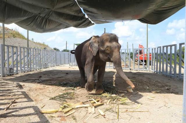 画像: ボルネオ環境保全活動|Happy Elephant ハッピーエレファント~水といきものの未来のために~
