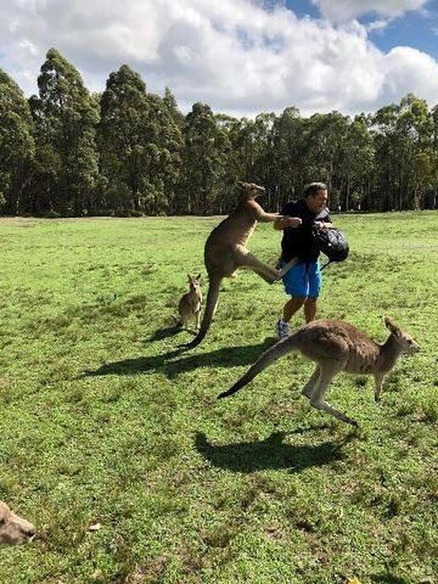 画像: カンガルーがニンジン欲しさに観光客攻撃、豪公園で被害相次ぐ