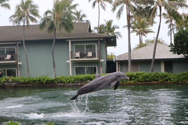 画像4: ひろみさんのハワイ滞在記