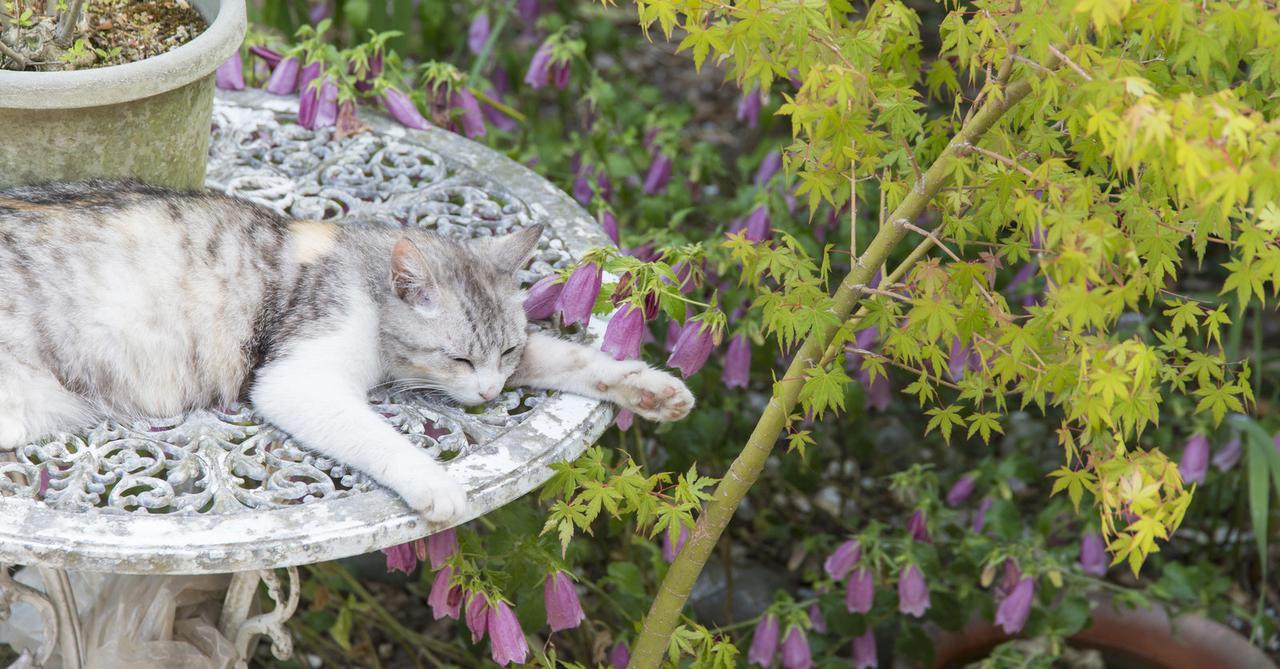 画像: ペットの熱中症、環境省が注意呼びかけ 気をつけるべき5つのサイン