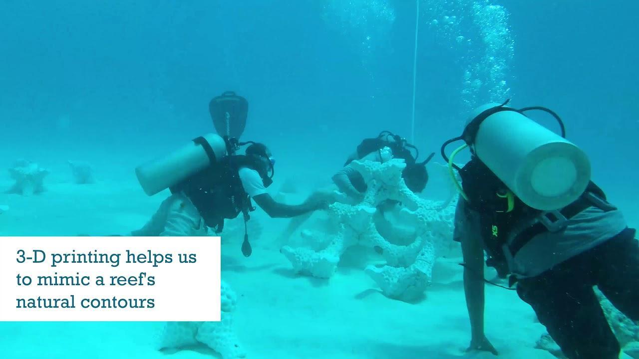 画像: World's Largest 3-D printed Reef installed at Summer Island Maldives www.youtube.com