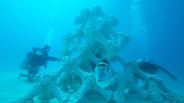 画像: 世界最大級、3Dプリントの人工サンゴ礁をモルディブの海へ