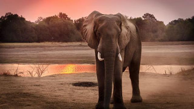画像: 哺乳類の絶滅速度が加速し多様性の回復には500万年以上かかる(GIGAZINE) - goo ニュース