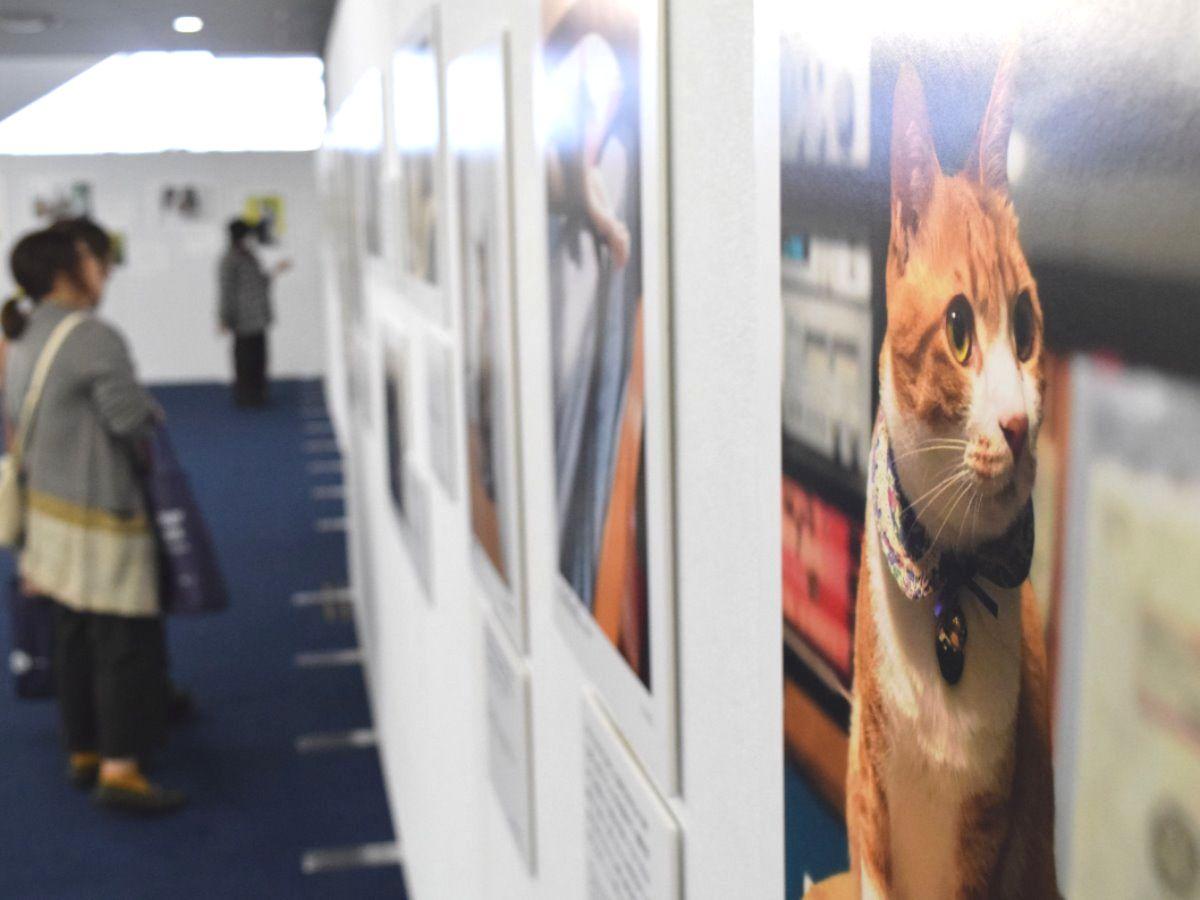 画像: 大阪でsippo写真展 「いい飼い主にめぐりあえて良かった」 | sippo(シッポ) |