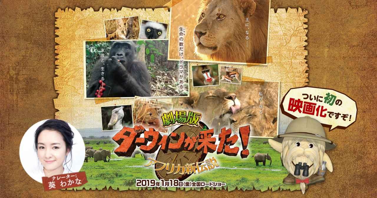 画像: 『劇場版 ダーウィンが来た!アフリカ新伝説』   2019年1月18日(金)全国ロードショー