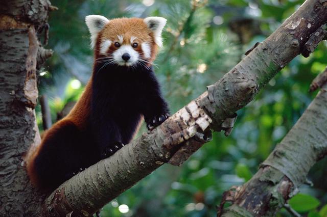 画像: SNSに惑わされるな、飼うとヤバい動物10種