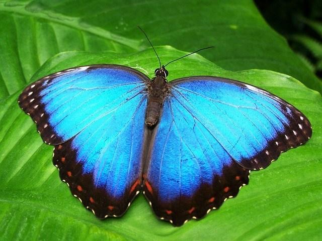 画像: 昆虫が急速に減少しているって本当?昆虫がいなくなることの影響は?