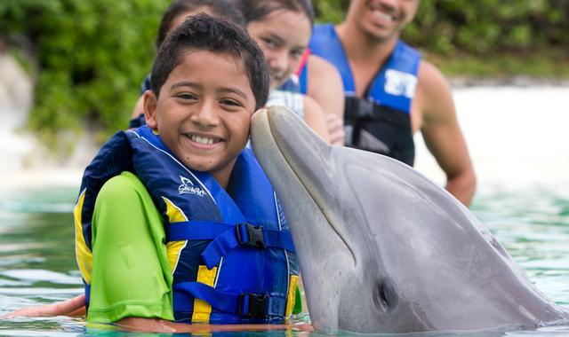 画像: シーライフ・パーク・ハワイ – イルカやアシカと一緒に泳げるシーライフ・パーク・ハワイ。ワイキキから車で30分。お子様連れのファミリーや大人にも人気の、イルカやアシカ、熱帯魚やウミガメ、エイ達と実際に触れ合える様々なプログラムを実施、現在生息している世界唯一のイルカとクジラの混血ウォルフィンにも出会えます。アシカやイルカのショーも毎日開催しています。