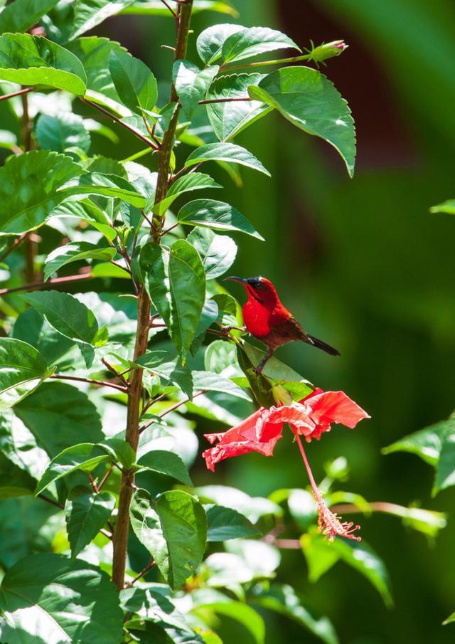 画像: 阿部雄介写真展 生命の楽園ボルネオ~メガダイバーシティの森~ | 大阪の植物園-咲くやこの花館-