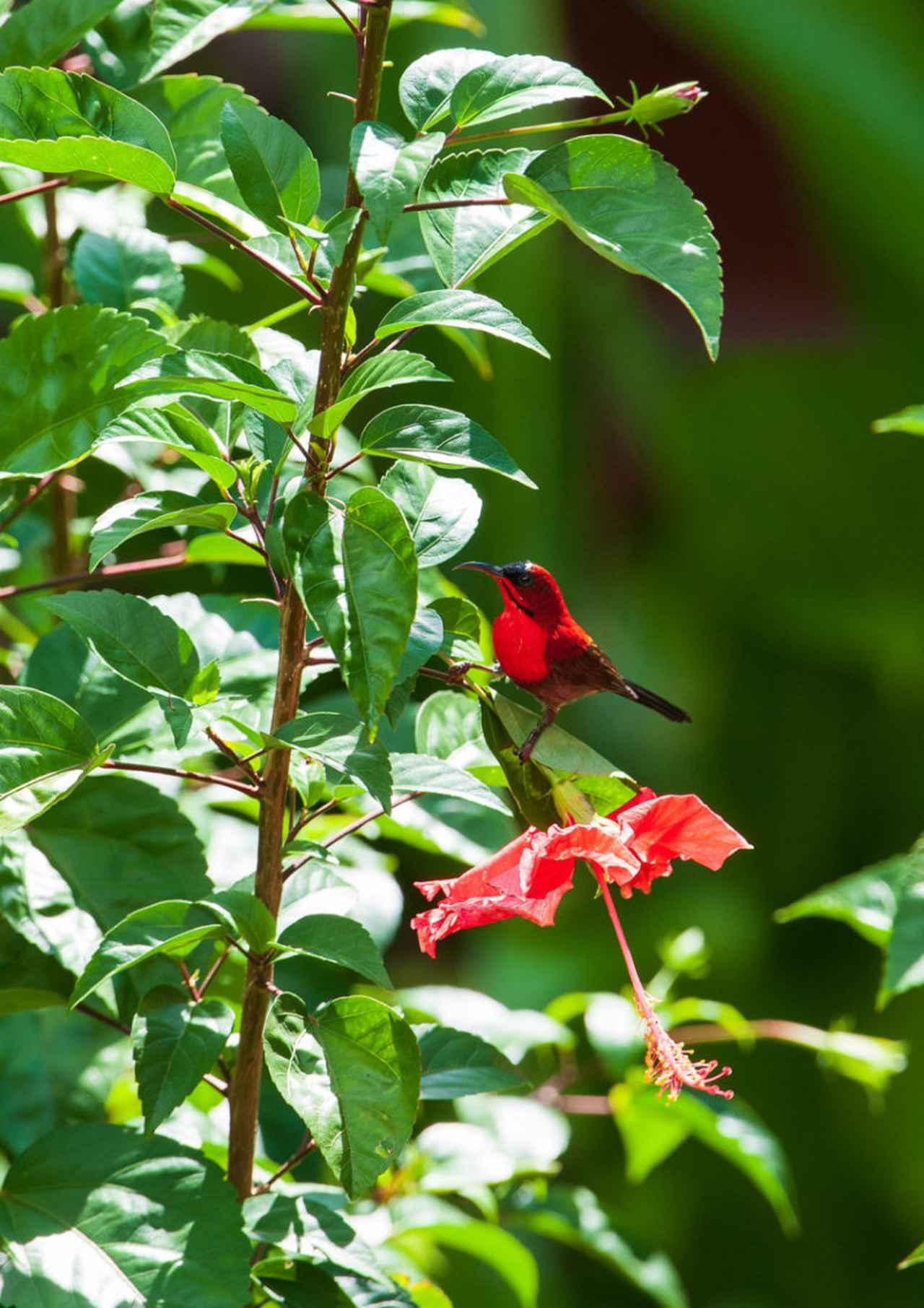 画像: 阿部雄介写真展 生命の楽園ボルネオ~メガダイバーシティの森~   大阪の植物園-咲くやこの花館-