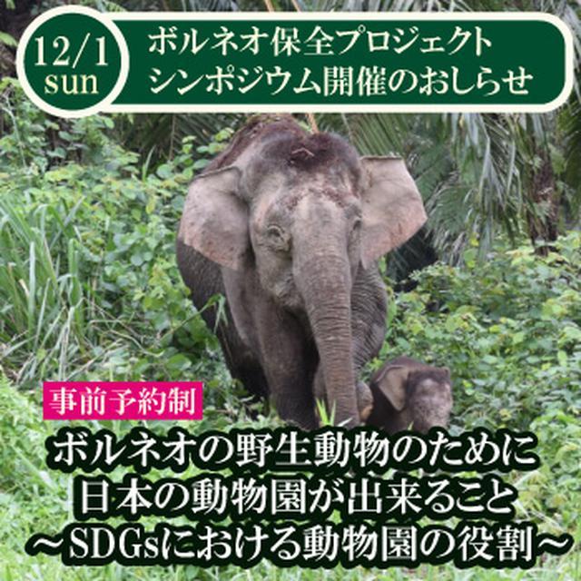 画像: ボルネオ保全プロジェクト シンポジウム開催のご案内「ボルネオの野生動物のために日本の動物園が出来ること ~SDGsにおける動物園の役割~」 | 神戸どうぶつ王国