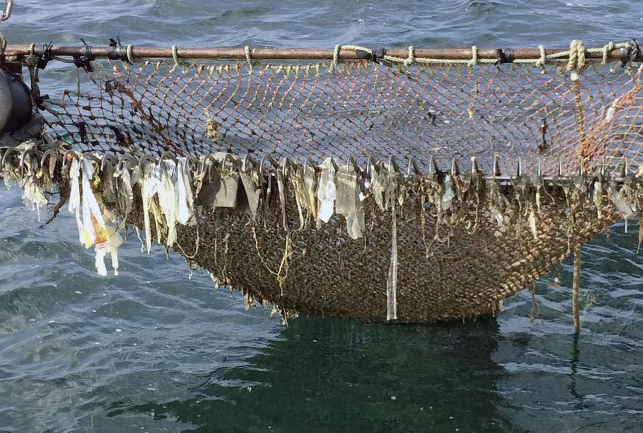 画像: 衝撃…レジ袋・プラごみ、大阪湾に「900万枚」沈んでいる