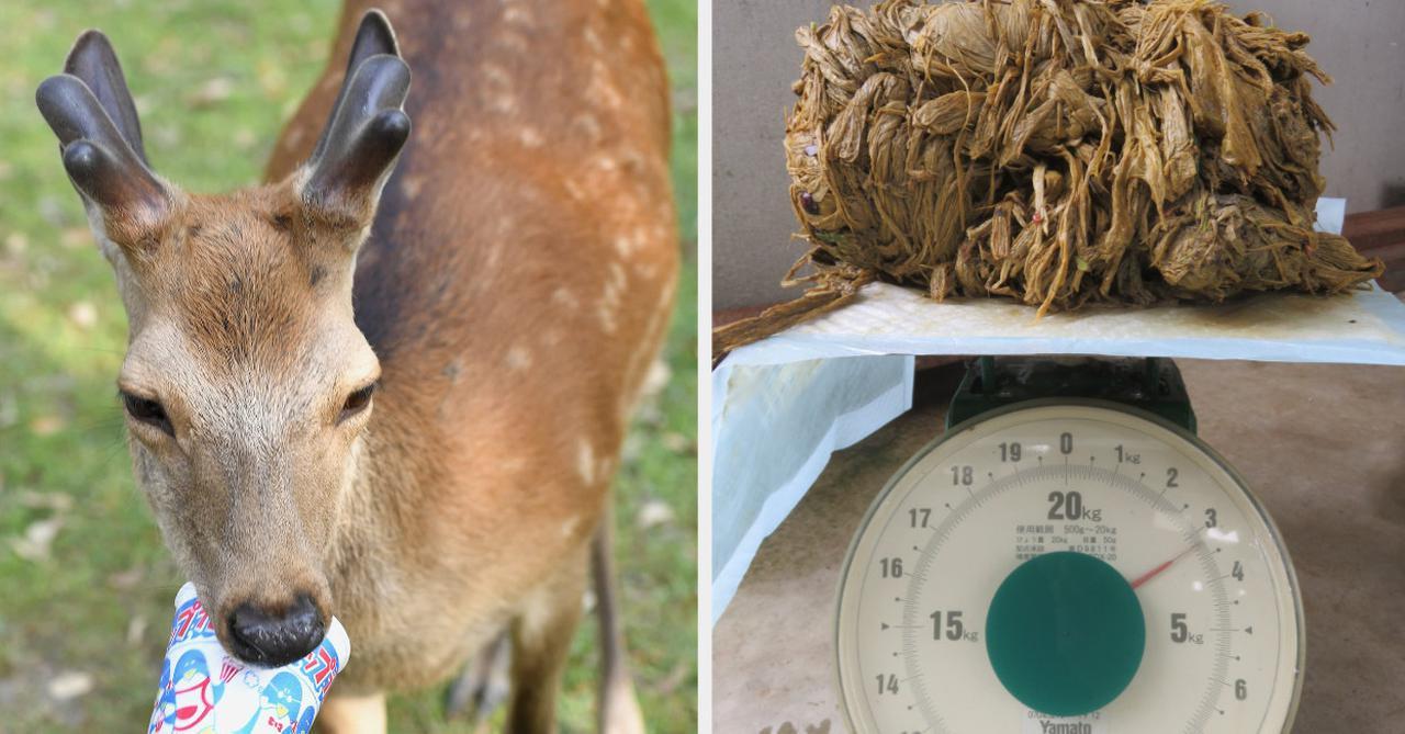 画像: 「死亡したシカの胃から出てきたのは…」 奈良の愛護団体が訴えつづける思い(BuzzFeed Japan) - Yahoo!ニュース