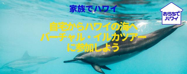 画像: 【家族でハワイ】日本から家族でバーチャル・イルカツアーに参加しよう:「おうちでハワイ」のコラム|allhawaii