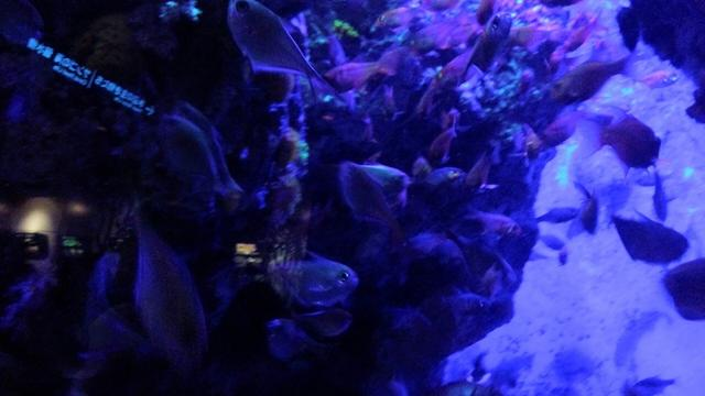 画像: 小さい魚