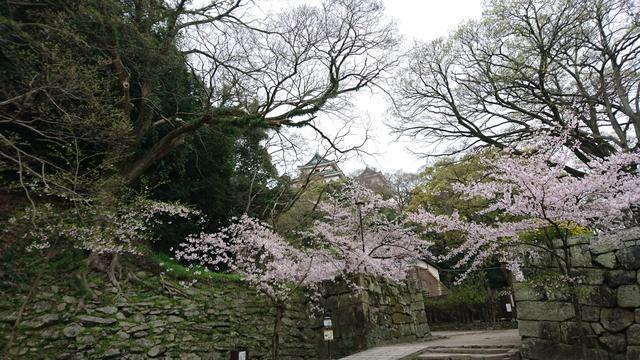 画像: 取材時は、桜の季節だったので、荘厳な景色と桜の風景を楽しむことができました。 今後は、「つつじ」などが見ごろになります。