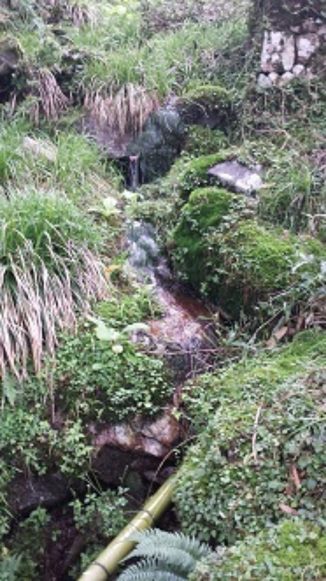 画像7: 7月31日:びわ湖バレイ 彩名の山ガール通信♩