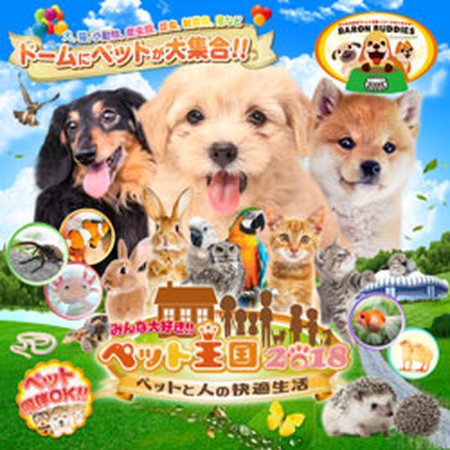 画像: 【ペットイベント】みんな大好き!!ペット王国|京セラドーム大阪