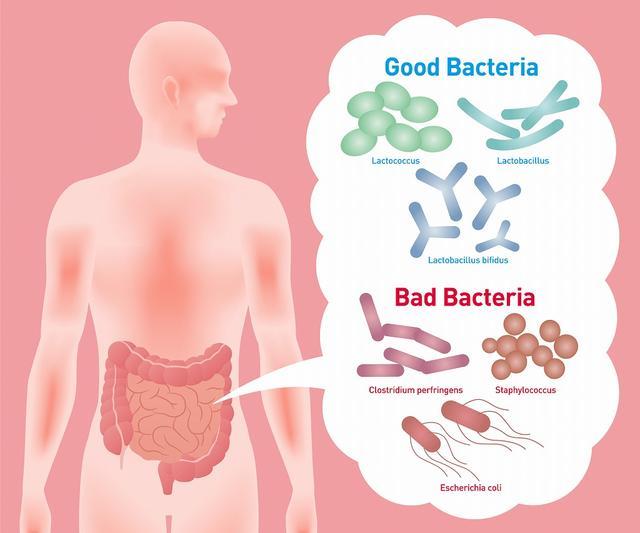画像1: デブ体質の原因は腸内環境にあった・・・?!