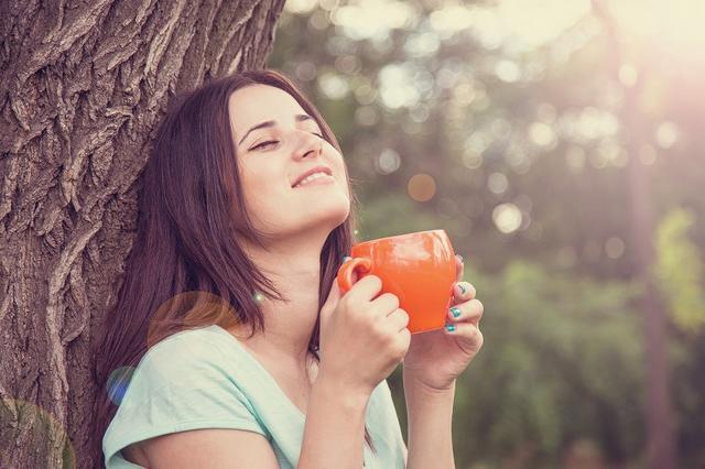 画像: 甘茶の優れた美容効果