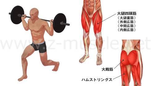 画像: www.z-muscle.net