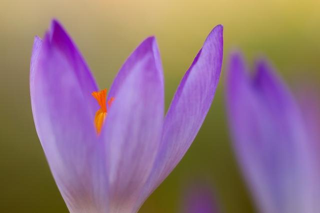 画像: ニキビ肌を守る注目成分「紫根エキス」