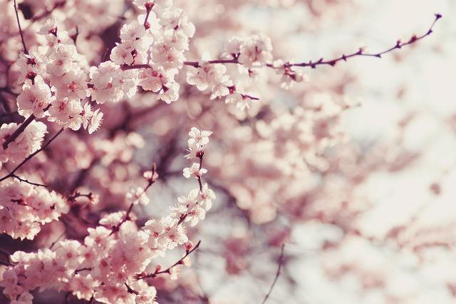 画像: 春は乾燥しやすいって知ってた?