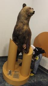 画像: (写真は阿寒湖畔エコミュージアムセンターの熊と。)