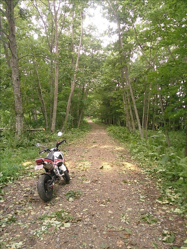 画像: この奥のゲートは鹿ゲートだろうと思いながら進む