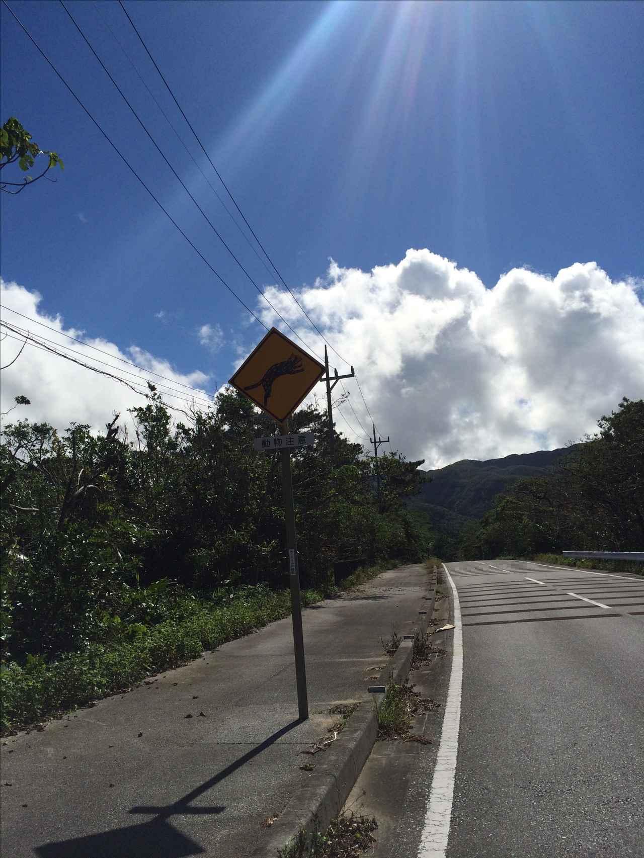 画像5: 西表島でレンタルバイクしてきたよ(福山理子)