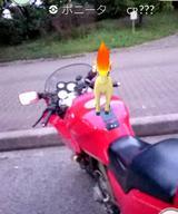 画像: バイクで「ポケモンGO!」してきました
