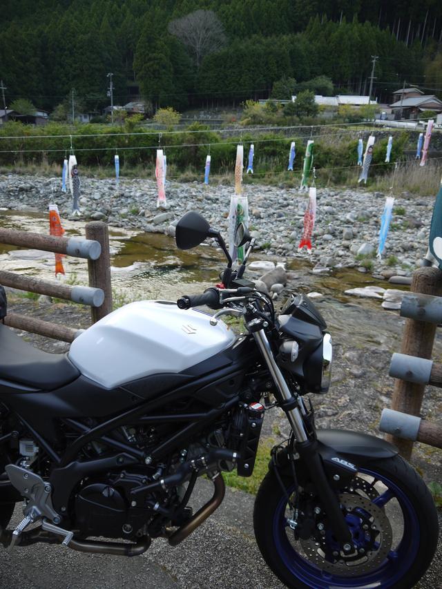 画像: 熊野市に入ると、鯉のぼりの多さが目に付きます。