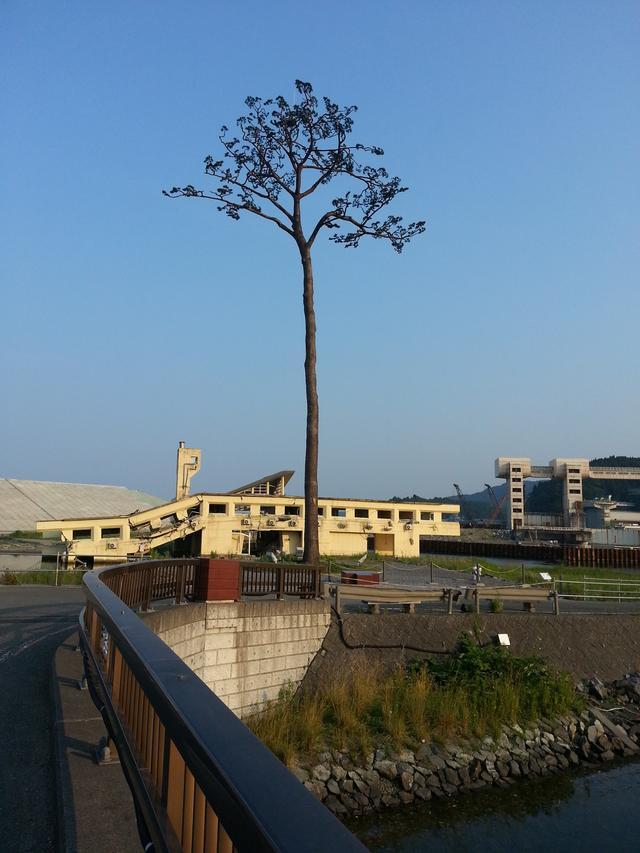 画像: この松の木から色んな気持ちが伝わってきます。震災前も震災も見ている松の木。今後、復興に向けて明るい陸前高田市を見守ってほしいです。