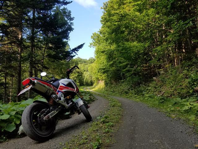 画像: この林道も走りやすかったです。