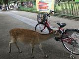 画像: 鹿も興味があるんでしょうか