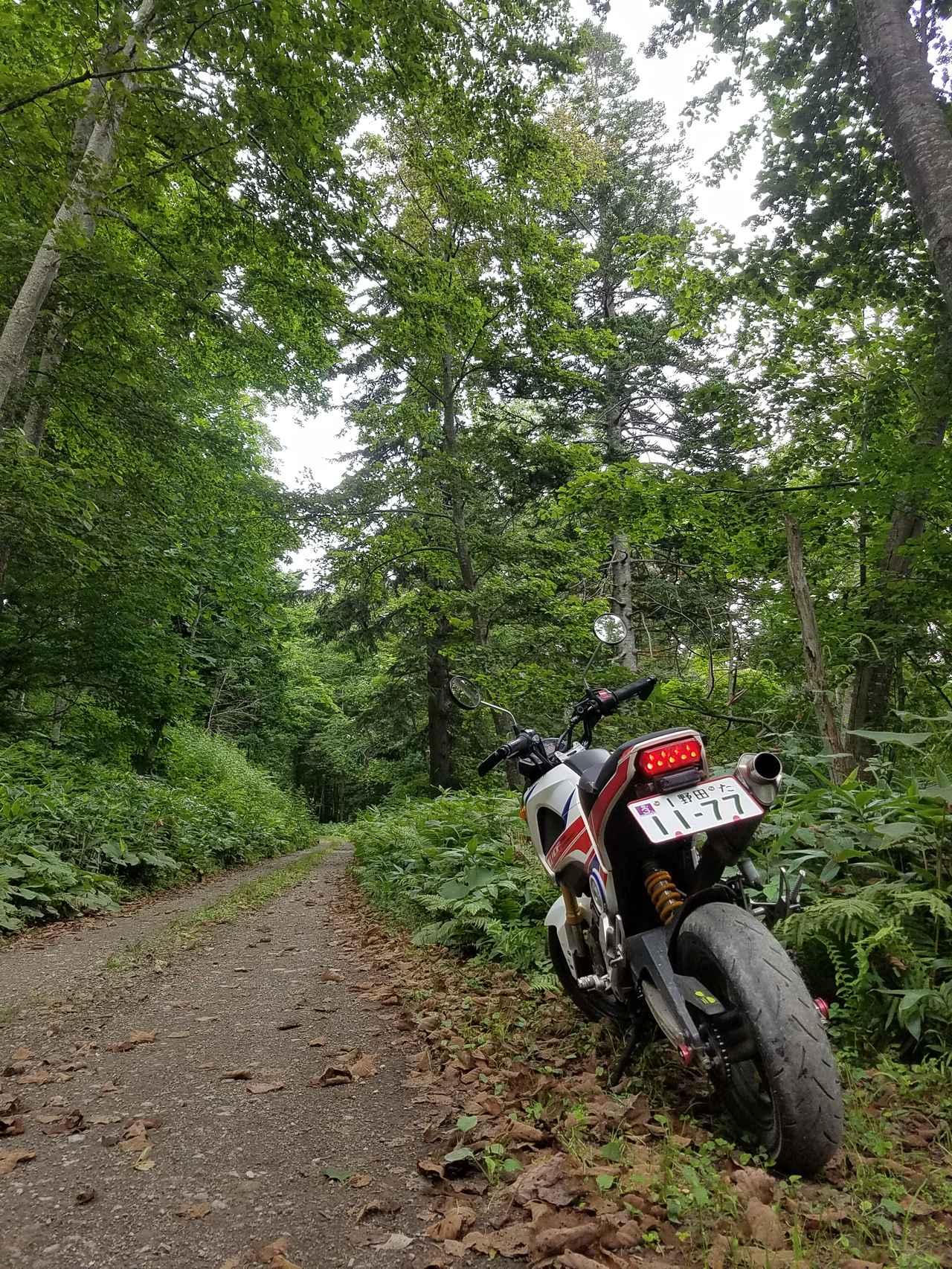 画像: 屈斜路湖畔林道。湖は林であまり見えないけど、ほどよいアップダウンがあって楽しい!