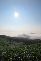 画像: 美幌峠の雲海です。午前7時頃。